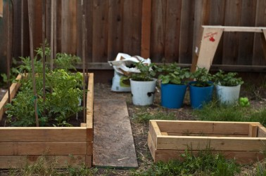 2x4 raised beds photo