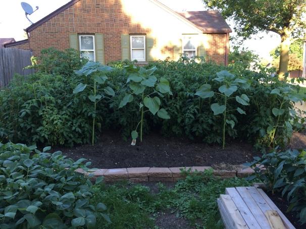 Garden 7-26-16.5