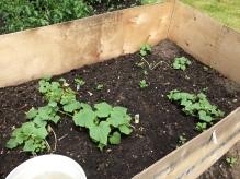garden 7-4.3